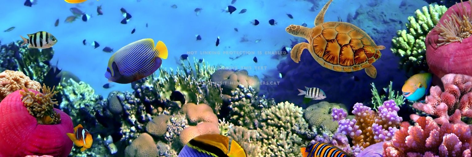Fish in the ocean